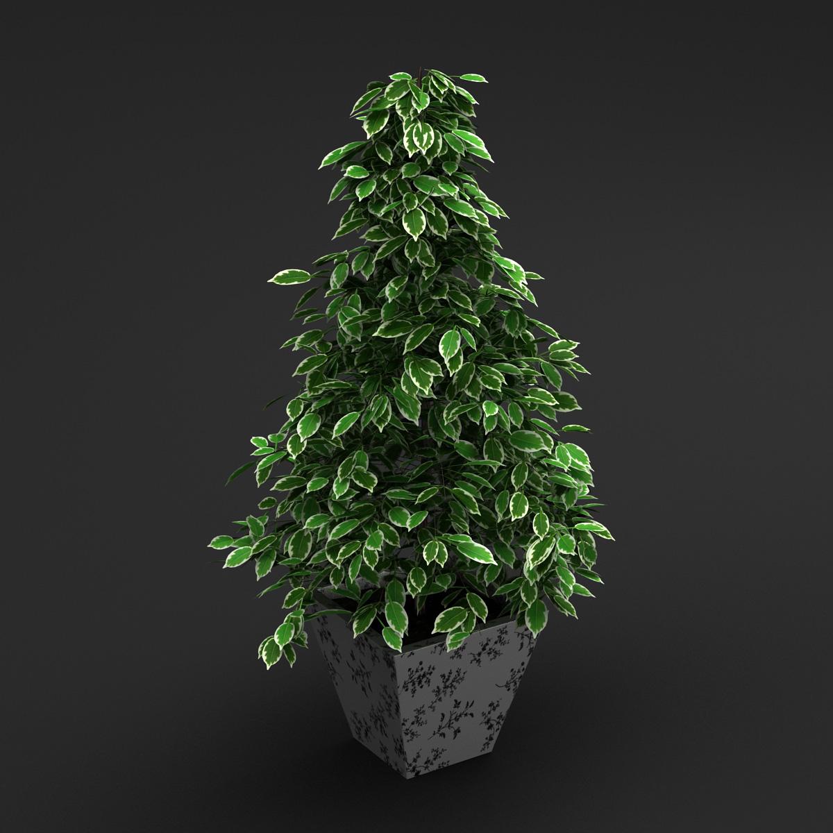MAIN FEATURES Interior Plants